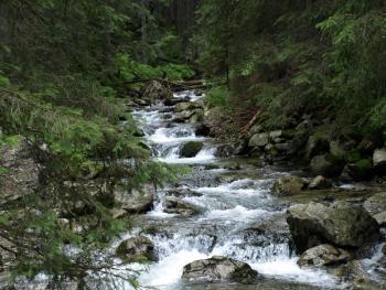 Potok Roztoka w Tatrach