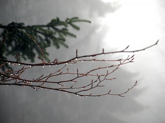 Lód na gałęzi